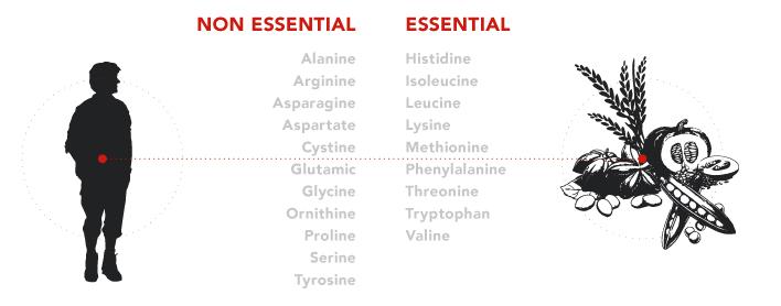 Non Essential Protein