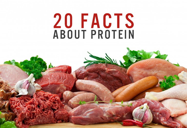 20 facts about protein